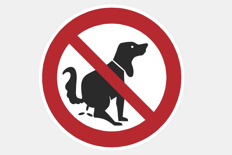 Hundekot Gefährdet Landwirte